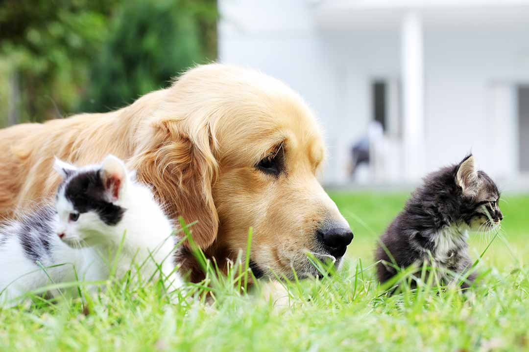 Dog and little cats together